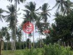 菲律宾Mimaropa普林塞薩港的土地,Km 55,Bgy. Napsan,编号49913206