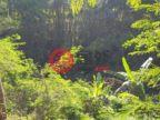 印尼巴厘岛Ubud的土地,编号51440534