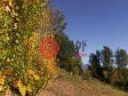新西兰奥塔哥Lake Hayes的房产,687 Lake Hayes - Arrow Junction Highway,编号32401911