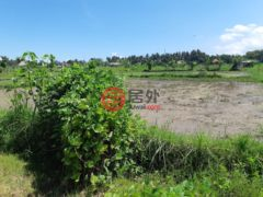 居外网在售印尼IDR 3,500,000,000总占地20000平方米的土地